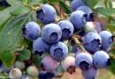 Натуральные витамины для здорового успеха